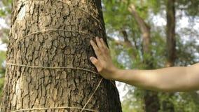 Een man hand raakt het close-up van een boom, is de schors van een boom close-up stock videobeelden