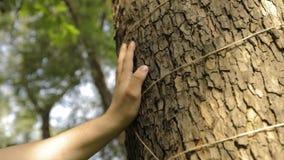 Een man hand raakt het close-up van een boom, is de schors van een boom close-up stock footage