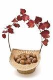 Een mand met hazelnoten en klimop. Royalty-vrije Stock Afbeelding