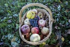 Een mandhoogtepunt van appelen, kweepeer, okkernoten, druiven royalty-vrije stock foto's