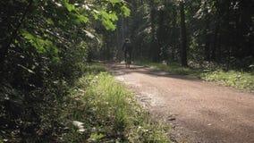Een mannelijke atleet berijdt een fiets door de zon, in een mooi park stock video