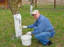 Een mannelijke kweker wit de boomstam van een appelboom Het werk van de de lentetuin stock fotografie