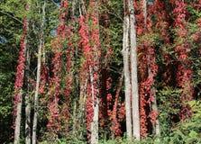 Een Mantel van Glorierijke Rood Royalty-vrije Stock Afbeelding