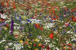 Een massa van gekleurde bloemen Stock Foto