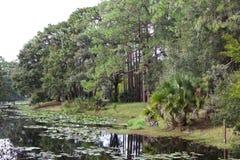 Een meer met leliestootkussens en bomen stock fotografie