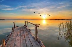 Een meer met vogels stock foto's