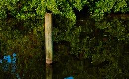 Een meertrospool op een glas kalme waterweg royalty-vrije stock fotografie