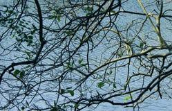 Een meerwater door boom wordt gezien die vertakt zich Royalty-vrije Stock Foto's