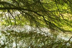 Een meerwater door boom wordt gezien die vertakt zich Royalty-vrije Stock Afbeeldingen