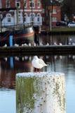 Een meeuw in de haven van Emden Stock Afbeelding