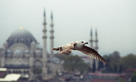 Een Meeuw die in Istanboel vliegen royalty-vrije stock afbeeldingen