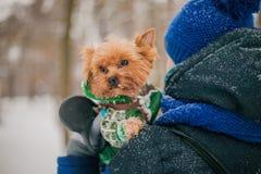 Een meisje die een hond op een leiband in een park in de winter in de sneeuw lopen zorg voor een hond in het koude seizoen stock fotografie