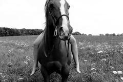 Een meisje en haar paard Royalty-vrije Stock Afbeelding