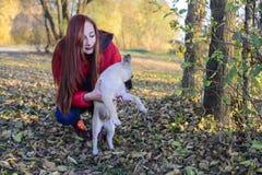 Een meisje houdt een hond in een weide met bladeren in de herfst wordt behandeld die royalty-vrije stock foto's