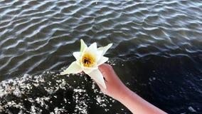 Een meisje houdt een lotusbloembloem boven het water Handclose-up stock footage