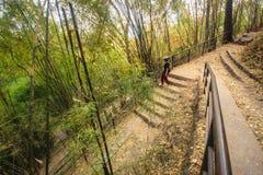 Een meisje liep in de bamboetuin stock fotografie