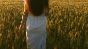 Een meisje loopt over een gebied van rijpe tarwe en raakt de oren van korrel met haar handen Langzame Motie Mooie vrouw stock videobeelden