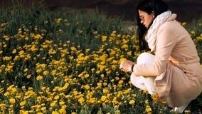 Een meisje loopt over het gebied met gele paardebloemen, crouches en verzamelt paardebloemen Close-up stock footage