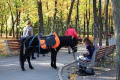 Een meisje met een kleine poneyzitting op een bank in het Park in de herfst schikte Park in van het Parknovosibirsk van de herfst royalty-vrije stock afbeelding
