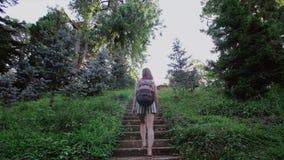 Een meisje met een rugzak beklimt op de oude steentreden door het naaldpark op de berg stock videobeelden