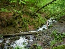 Een meisje met een rugzak op een toeristensleep in het bos dichtbij de stroom stock afbeeldingen