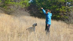 Een meisje speelt met een hond in het bos stock video