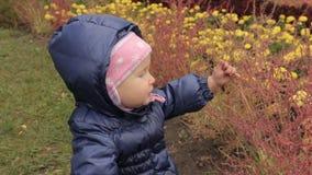 Een meisje wat betreft rode struiken op een bloembed in het park tegen de gele bloem stock videobeelden