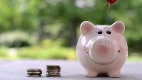 Een meisje werpt een muntstukcent in een roze spaarvarken stock videobeelden