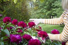 Een meisjes scherpe bloemen in de binnenplaats Royalty-vrije Stock Afbeelding