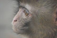 Een melancholische aap royalty-vrije stock foto's