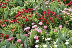 Een mengsel van witte, rode en roze bloemen stock foto