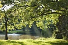 Vijver in een park Royalty-vrije Stock Foto's