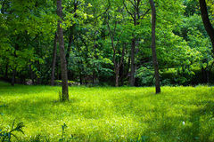 Een mening binnen de bomen Stock Afbeelding