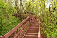 een mening, die omhoog voor de bovenkant van een lange houten trap kijken die in een bosdeel van een wandelingssleep wordt en die stock foto