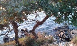 Een mening door de bomen Stock Fotografie