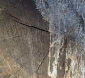 Een mening in dwarsdoorsnede van het besnoeiingseind van het gesneden houten textuur uitspreiden royalty-vrije stock fotografie