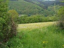 Een mening met een mooi panorama in Luxemburg Stock Fotografie