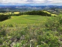 Een mening over de heuvels en de wijngaarden van Sonoma-Provincie, Californië royalty-vrije stock fotografie