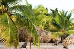 Een mening van de palmen op een zandig strand in Punta Cana, La Altagracia, Dominicaanse Republiek Exemplaarruimte voor tekst Stock Foto