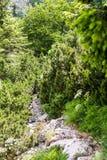 Een mening van de steile aardsleep in bergen van Kroatisch nationaal park Risnjak Royalty-vrije Stock Afbeeldingen