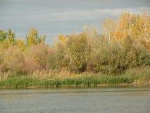 Een mening van het bos op de banken van de rivier Stock Afbeeldingen