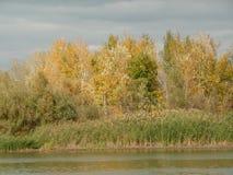 Een mening van het bos op de banken van de rivier Royalty-vrije Stock Afbeelding