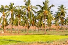 Een mening van het Indische landelijke landschap, Puttaparthi, Andhra Pradesh, India Exemplaarruimte voor tekst Royalty-vrije Stock Afbeelding