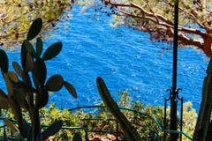 Een mening van het overzees door de bomen Stock Fotografie