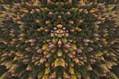 Een mening van hierboven aan het perspectief van de bosa-vogel op de de herfstkleuren van de bomen in het hout stock afbeelding