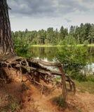 Een mening van klein meer in een bos Stock Foto