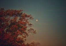 Een mening van maan met een artistieke aanraking stock fotografie