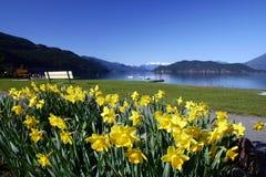 Een mening van meer Harrison met gele bloemen Stock Afbeelding