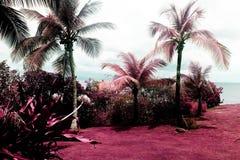 Een mening van een mooie tuin en palmen in Vieques, Puerto Rico in kleureninfrared Royalty-vrije Stock Fotografie