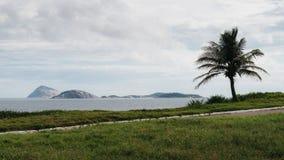 Een mening van een palm met een blauwe hemel en de oceaan als achtergrond op een strand van Rio de Janeiro, Brazilië Stock Foto